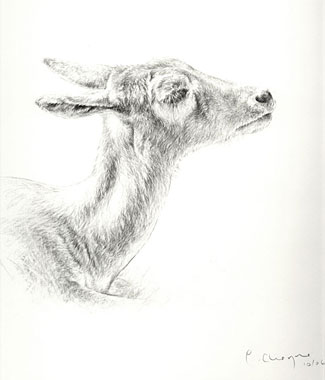 CLICK IMAGE TO ENLARGE