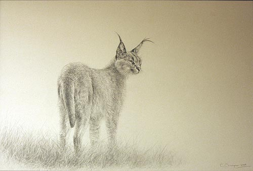 CLICK IMAGE FOR DETAIL