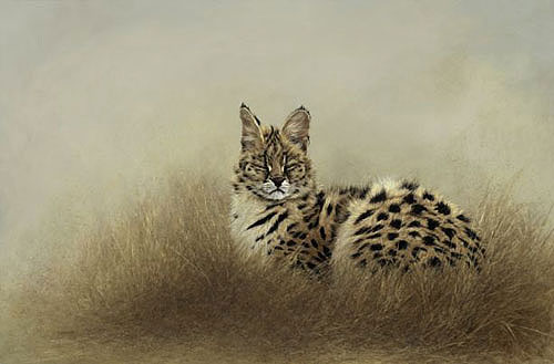 © C CHEYNE 2007  Serval in Grass