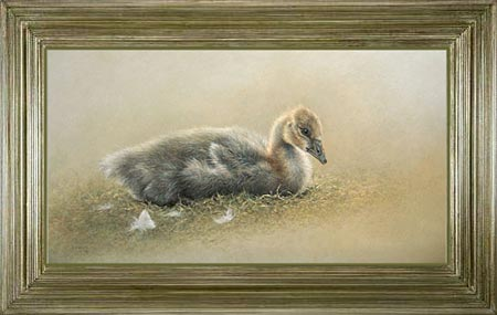 JUVENILE GOOSE 