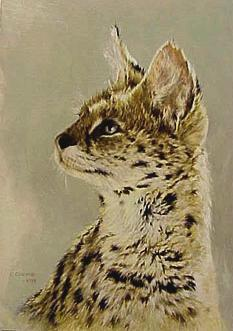© C CHEYNE 2000 Serval portrait of 'Lady' Wellington Zoo