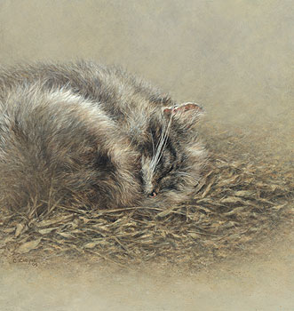 © C CHEYNE 2010 Sleeping Wildcat